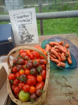 Tomatenretter Ernte
